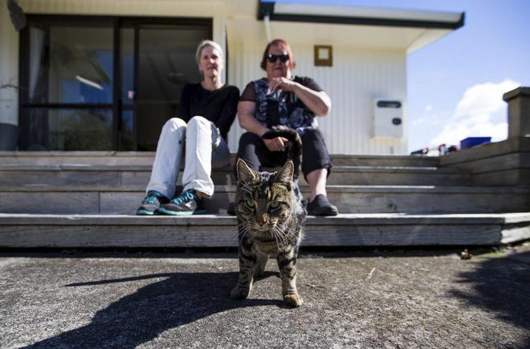 В новейшей Зеландии разоблачен кот, тайно живший надве семьи