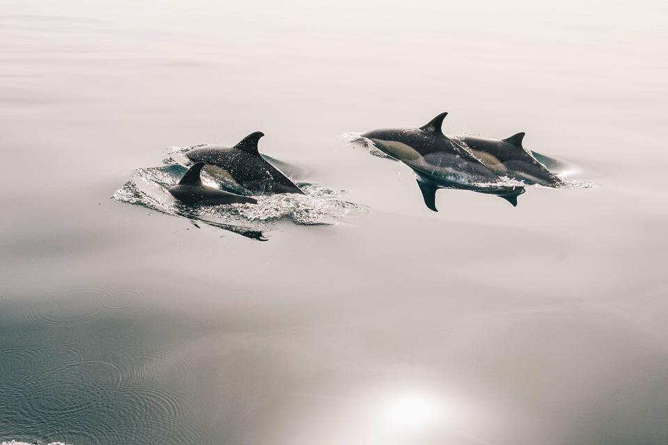 ВНовороссийске погибли практически 70 дельфинов