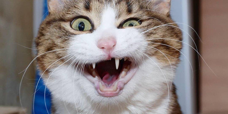 Смешные картинки с улыбающимися котами