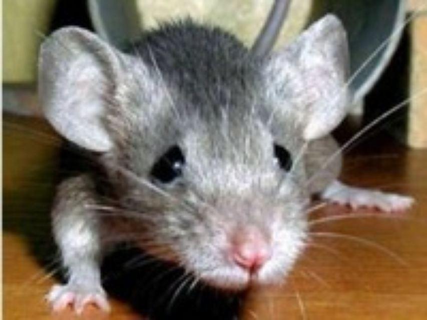 Мыши в Казахстане съели деньги в банкомате