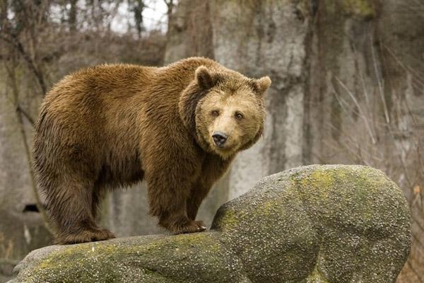 ВКузбассе дальнобойщик насмерть сбил медведя
