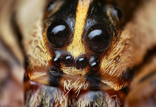 В Англии вирус превращает гусениц на«зомби»