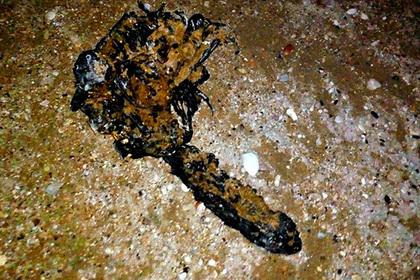 ВСевастополе на береге отыскали неимоверное существо— Чудо-юдо