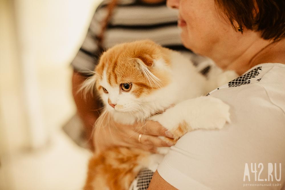 Домашние животные заражают людей смертельно опасным паразитом
