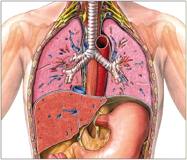 Ученые назвали ненужные человеческому телу органы