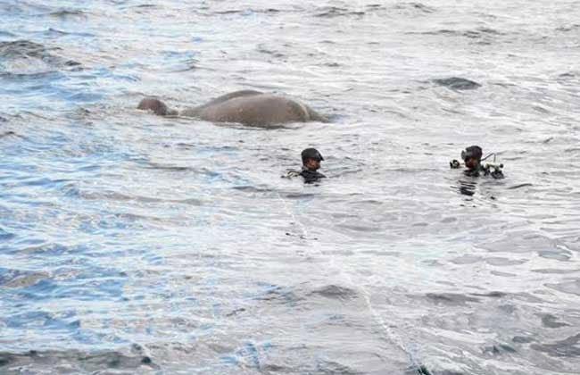 НаШри-Ланке спасли унесенного вморе слона