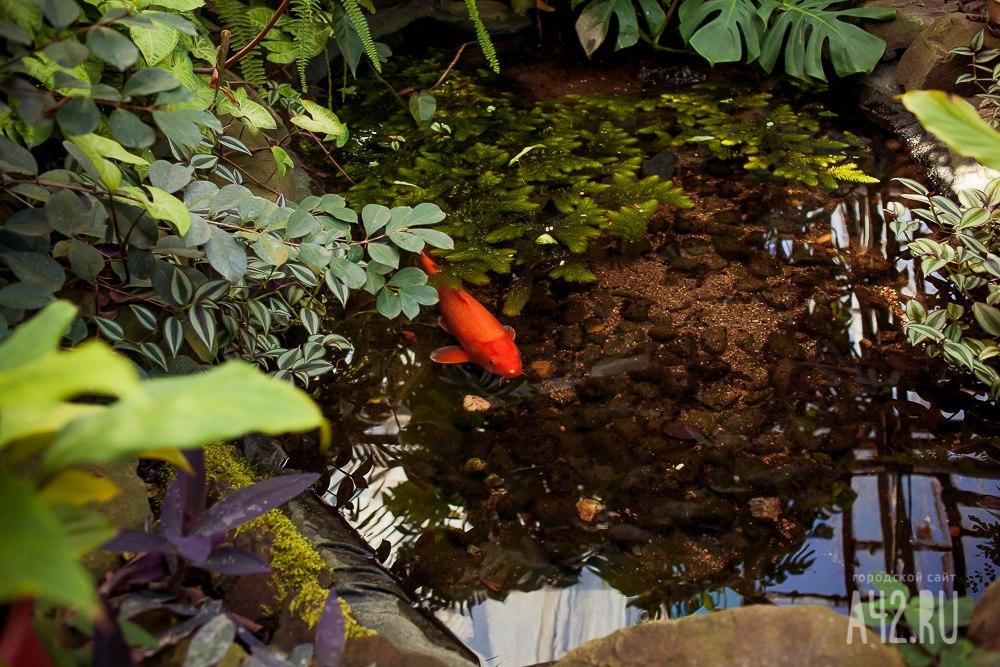 К концу года ботанический сад переедет в Лесную Поляну