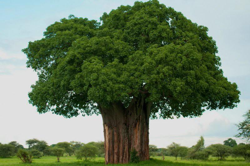 «Зеленые» посоветовали использовать прах умерших вкачестве удобрения вБельгии