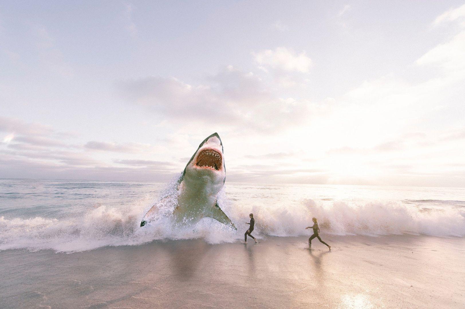 У берегов популярных пляжей стало появляться аномальное количество акул-людоедов