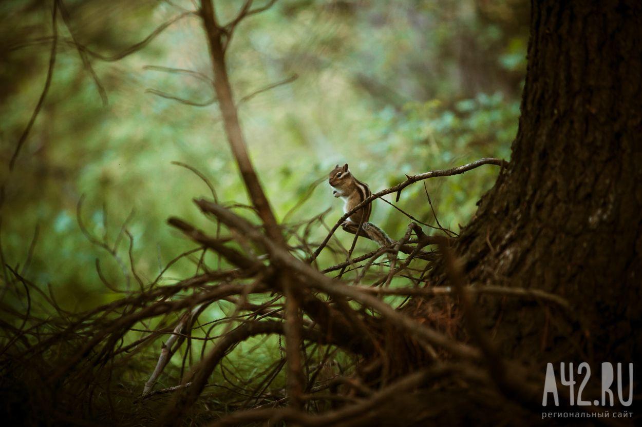 В Кузбассе создадут компенсационные леса