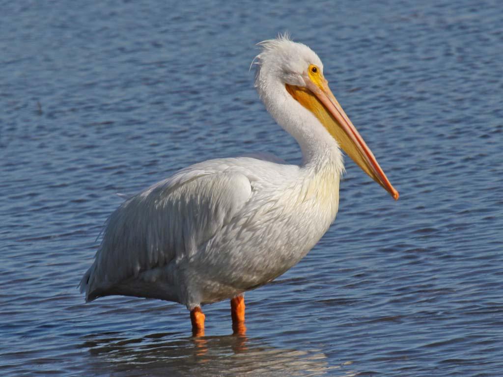 Граждане Омской области пустили нашашлык птиц изКрасной книги