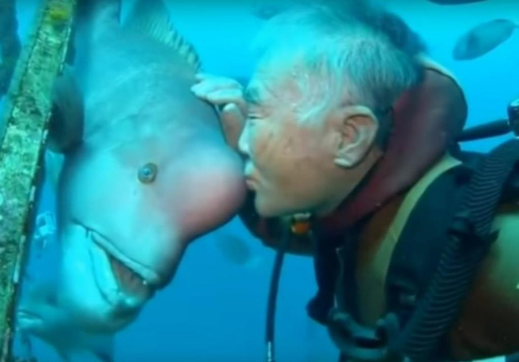 Японец практически 30 лет дружит собитающей вподводном монастыре огромной рыбой