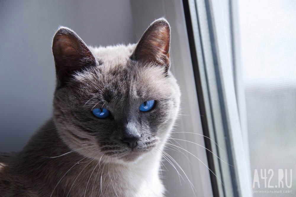Рейс Киев— Анкара задержали из-за кота-«нелегала»