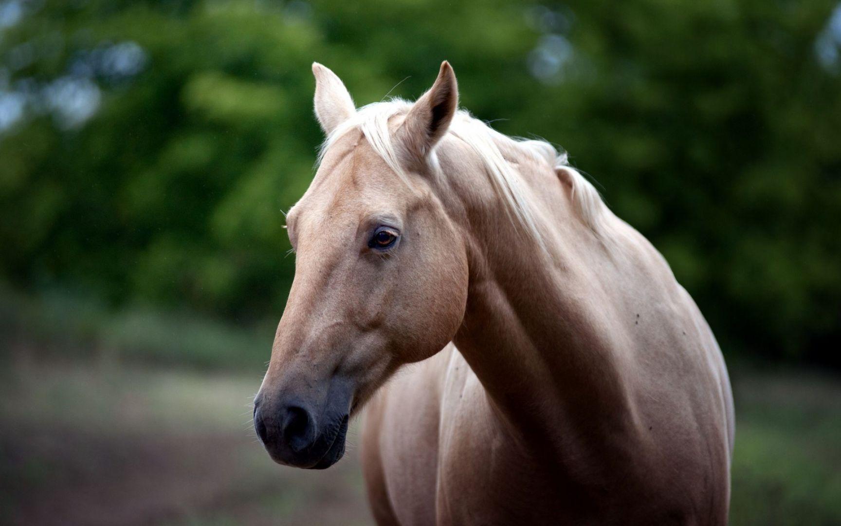 Хозяева лошади, покусавшей ребенка, выплатили 20 000 руб. заморальный вред