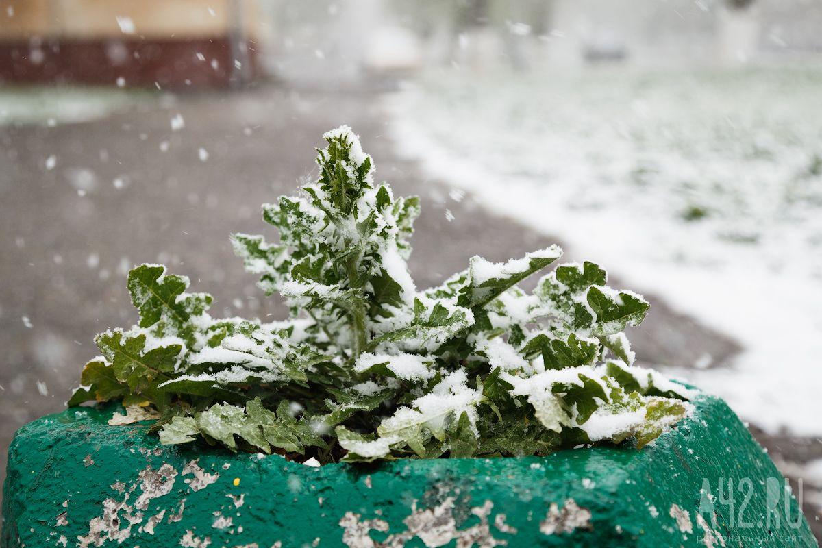 Помёрзли— ихватит. Резкое потепление придёт в столицу России наследующей неделе