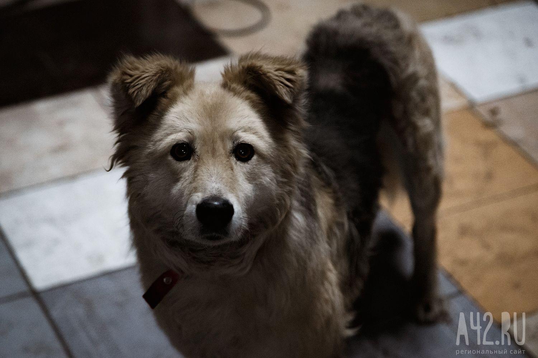 В КНР собачка выкопала похороненного живьем малыша