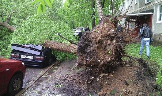 ВСК назвали четкое количество жертв урагана