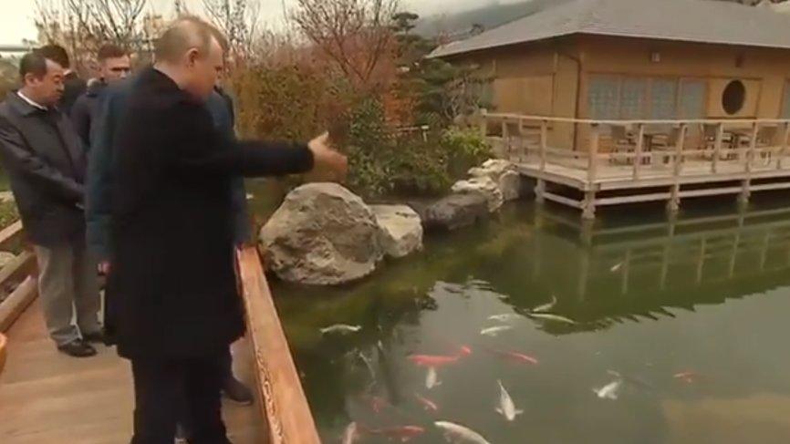 Путин вовремя прогулки посаду вКрыму покормил карпов