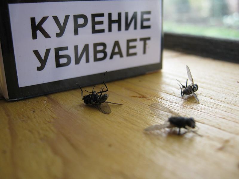 ВХабаровске ребенок «штрафовал» магазины за преступную реализацию сигарет