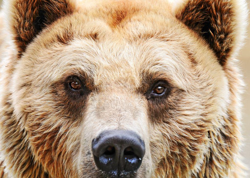 Милиция Челябинска проверяет информацию огуляющем погороду медведе
