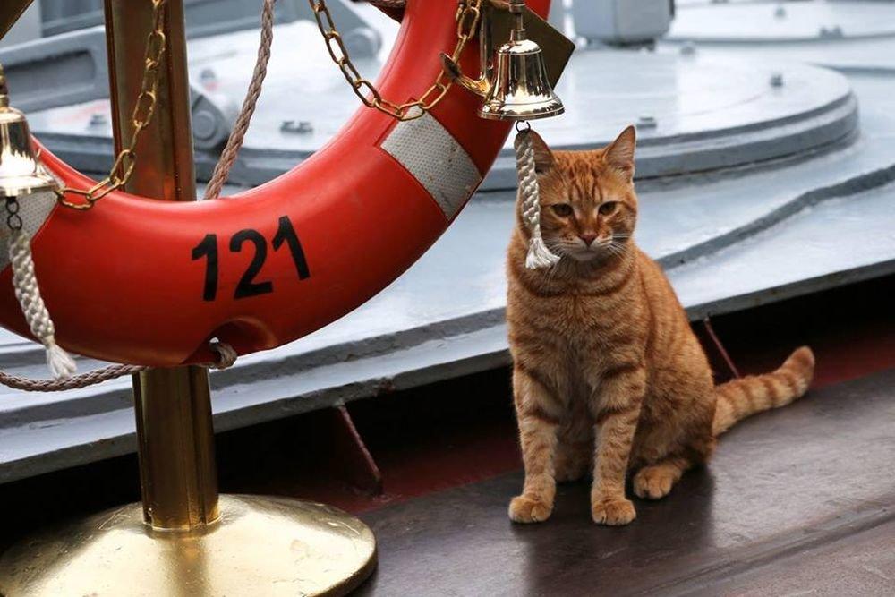 Минобороны показало первого кота-моряка, участвовашего впоходе ВМФ кСирии